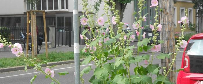 Basel blüht dank Guerilla Gardening