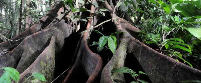 Eintauchen ins Waldleben: «Das Geheimnis der Bäume» von Luc Jacquet