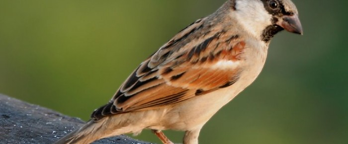 Die Vögel, nicht von Hitchcock – Rezension von Dominik Riedo