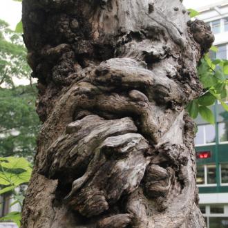 gesichtet #114: Der Waldgeist vom St. Alban