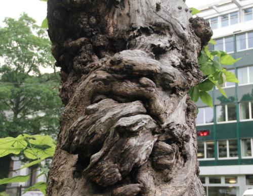 Trompetenbaum 1