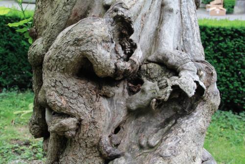 Trompetenbaum 2